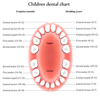 Tooth Eruption Chart